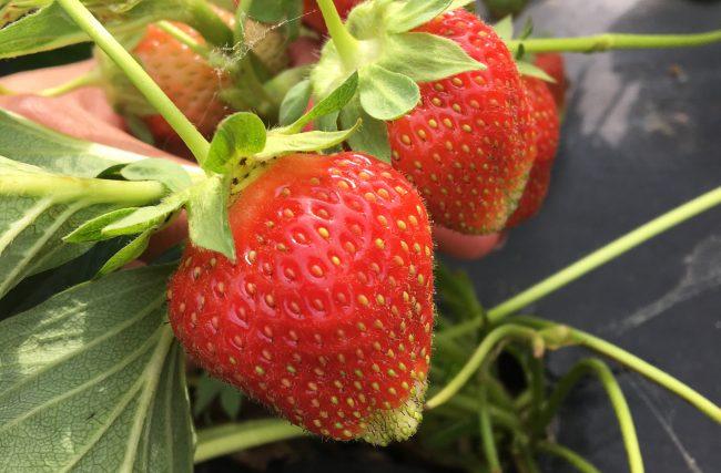 Na Feira com Patricia + Salada Super Antioxidante & Anti-inflamatória